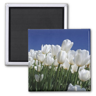 Mountain of Tulips on a perfect blue sky Magnet