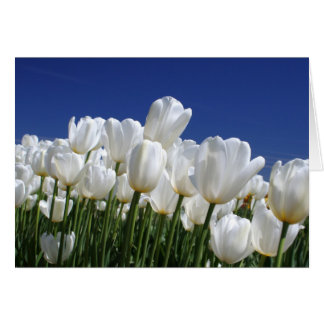 Mountain of white tulips against a blue sky card