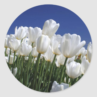 Mountain of white tulips against a blue sky classic round sticker