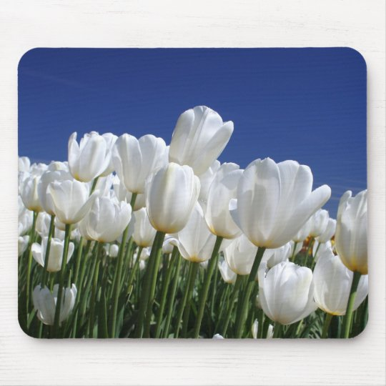 Mountain of white tulips against a blue sky mouse pad
