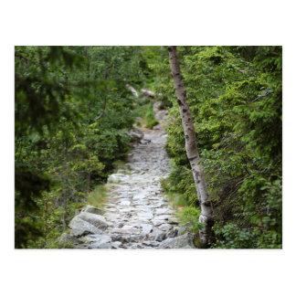 Mountain Path Postcard