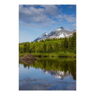Mountain Peaks Reflect Into A Beaver Pond Poster