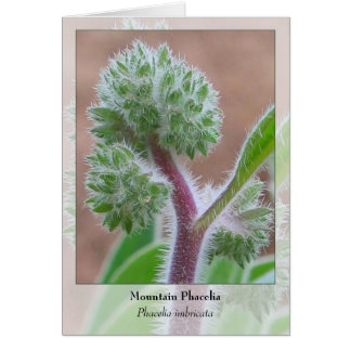 Mountain Phacelia - Native Notecard Stationery Note Card