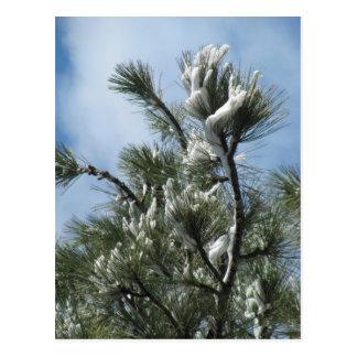 Mountain Pine Magic After the Storm Postcard