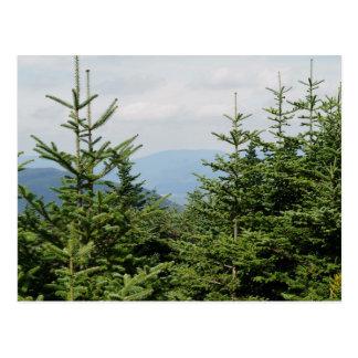 Mountain Pines Postcard