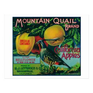 Mountain Quail Apple Crate Label Postcard