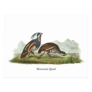 Mountain Quail, John Audubon Post Cards