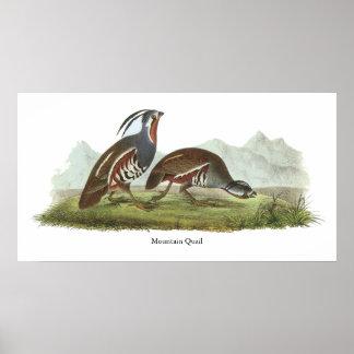 Mountain Quail, John Audubon Print