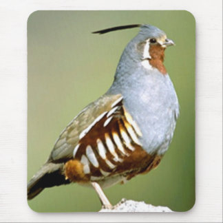 Mountain Quail Mouse Pad