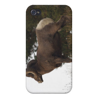 Mountain Sheep iPhone Case iPhone 4/4S Cases