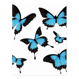 Mountain Swallowtail Postcard