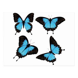 Mountain Swallowtail Set Postcard