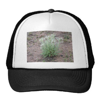 Mountain thistle mesh hats