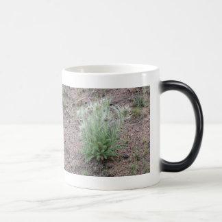 Mountain thistle magic mug