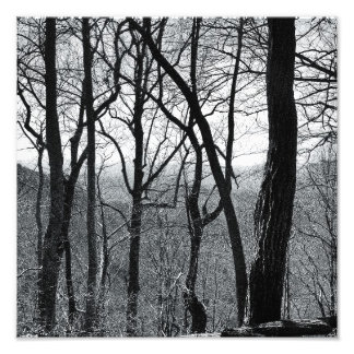 Mountain Trees In Winter Photo Print