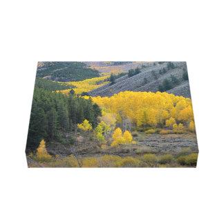 Mountain View escénico de Colorado Impresiones De Lienzo