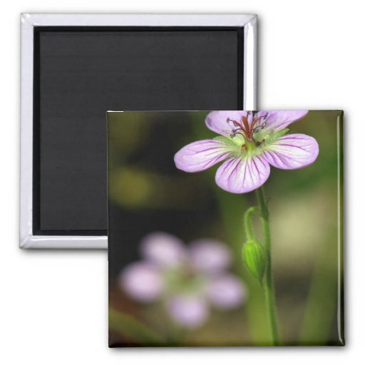 mountain wildflower 2 inch square magnet