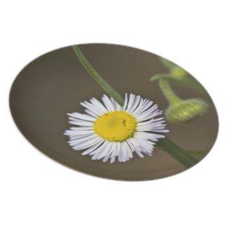 Mountain Wildflower Plates