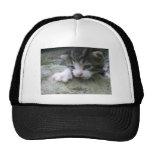 Mountaineer Kitten Trucker Hat