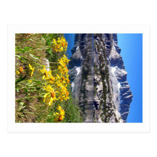 Mountains and Flowers Postcard