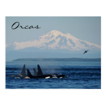 Mountains and Orcas Postcard