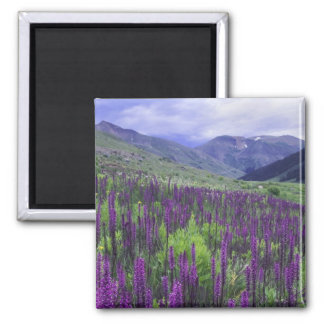 Mountains and wildflowers in alpine meadow, 2 2 inch square magnet