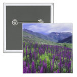 Mountains and wildflowers in alpine meadow, 2 pin