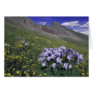 Mountains and wildflowers in alpine meadow, Blue Greeting Card