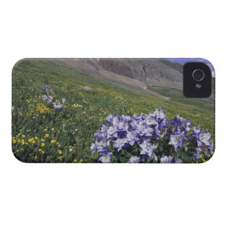 Mountains and wildflowers in alpine meadow, Blue iPhone 4 Case-Mate Case