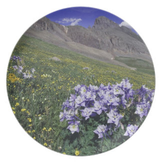 Mountains and wildflowers in alpine meadow, Blue Dinner Plates