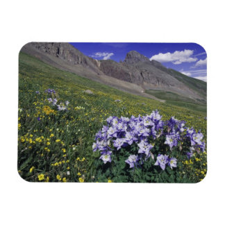 Mountains and wildflowers in alpine meadow, Blue Rectangular Photo Magnet