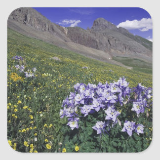 Mountains and wildflowers in alpine meadow, Blue Square Sticker