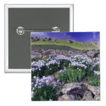 Mountains and wildflowers in alpine meadow, pinback buttons