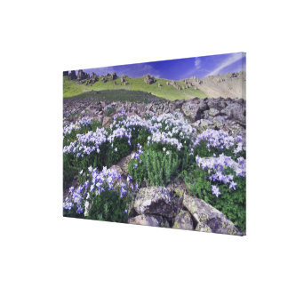 Mountains and wildflowers in alpine meadow, canvas print