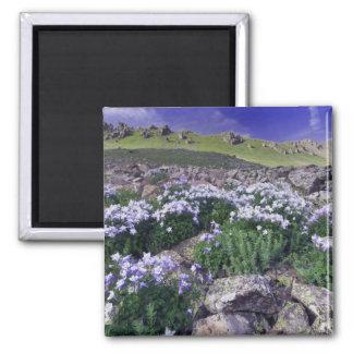 Mountains and wildflowers in alpine meadow, 2 inch square magnet