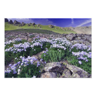 Mountains and wildflowers in alpine meadow, photo print