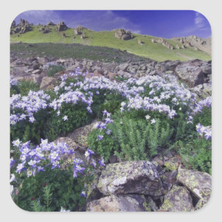 Mountains and wildflowers in alpine meadow, square sticker
