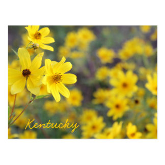 Mountainside Wildflowers by JerseyFawn Post Cards
