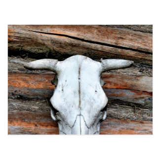 Mounted Cow Skull Postcard