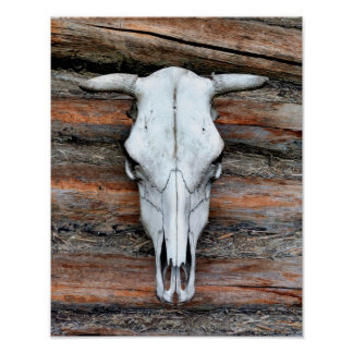 Mounted Cow Skull Poster