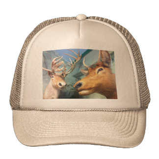 Mounted White Tail Deer Head Hats