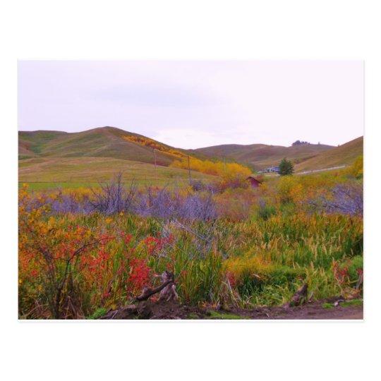 Mountian Colors Postcard