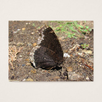Mourning Cloak Butterfly ~ ATC Business Card