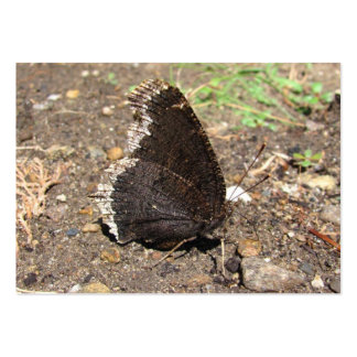 Mourning Cloak Butterfly ~ ATC Large Business Card