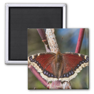 Mourning Cloak Butterfly Refrigerator Magnets
