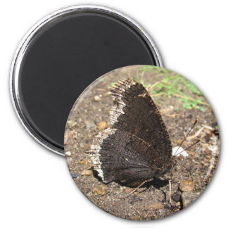 Mourning Cloak Butterfly ~ magnet