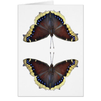 Mourning Cloak Butterfly - Nymphalis antiopa Card