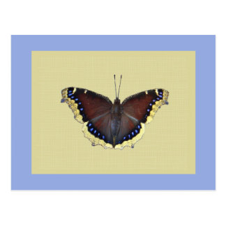Mourning Cloak Butterfly - Nymphalis antiopa Postcard