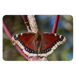 Mourning Cloak Butterfly Flexible Magnet