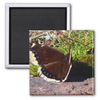 Mourning Cloak Butterfly Upclose Fridge Magnet
